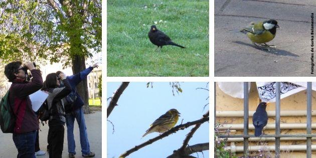 Persones amb prismàtics observant diverses espècies d'ocells que podem trobar al Montjuïc