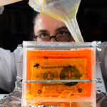 [CONCERT] Eli Gras Presenta Museum of the Dry Bugs