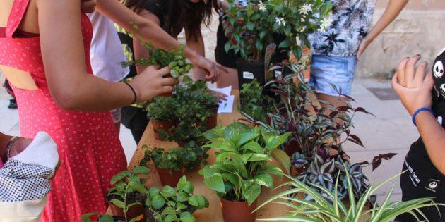 Casal d'estiu Planta't : experiències que ens fan créixer